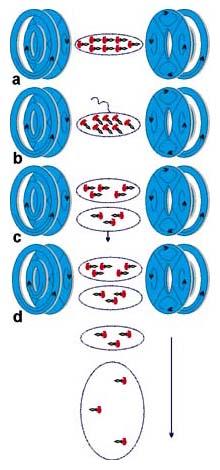 Принципиальная схема атомного лазера