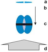 Наблюдение когерентности бозе-конденсата